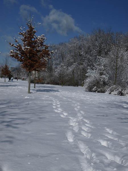 Zima w parku 3.